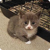 Adopt A Pet :: DUSTY - Golsboro, NC