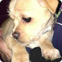 Adopt A Pet :: Ethel - Alta Loma, CA