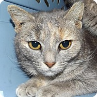 Adopt A Pet :: Whitney Houston - Orleans, VT