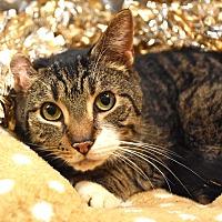 Adopt A Pet :: Holyfield - Bristol, CT
