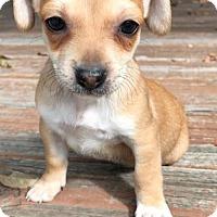 Adopt A Pet :: Terra - Weston, FL