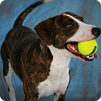 Adopt A Pet :: Woody - Toms River, NJ