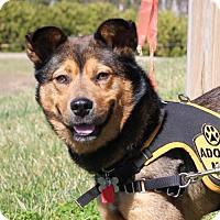Adopt A Pet :: Hunter - Cary, NC