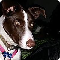 Adopt A Pet :: Baby Boo - Puyallup, WA