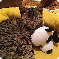 Adopt A Pet :: Clara Bow - Brooklyn, NY