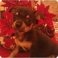 Adopt A Pet :: Chi Chi Chong - Seneca, SC