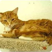 Adopt A Pet :: FLOUNDER - El Cajon, CA