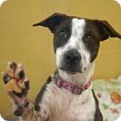 Adopt A Pet :: Flora