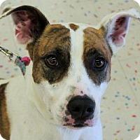 Adopt A Pet :: Leela - Phoenix, AZ