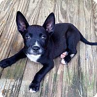 Adopt A Pet :: Grady - Starkville, MS