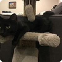 Adopt A Pet :: Duchess - Vancouver, BC