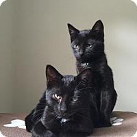 Adopt A Pet :: Cocnut - Orlando, FL