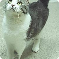 Adopt A Pet :: GLITTER - Tiffin, OH