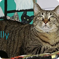 Adopt A Pet :: Sally - Englewood, FL