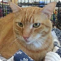 Adopt A Pet :: Noah - Maryville, TN