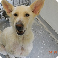 Adopt A Pet :: ALASKA - Sandusky, OH