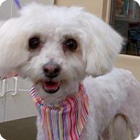 Adopt A Pet :: Mattie - San Dimas, CA