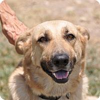 Adopt A Pet :: Adalaide - Dripping Springs, TX