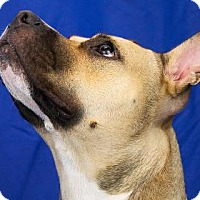 Terrier (Unknown Type, Medium) Mix Dog for adoption in New Orleans, Louisiana - Cheetah