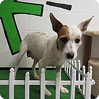 Terrier (Unknown Type, Medium) Mix Dog for adoption in Laingsburg, Michigan - Colby