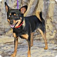 Adopt A Pet :: Taz - Yreka, CA