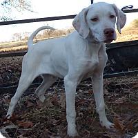 Adopt A Pet :: Corker - Bedminster, NJ