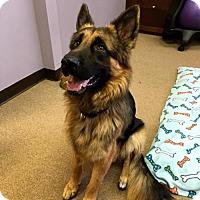 Adopt A Pet :: Axel - Morrisville, NC