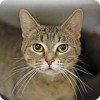 Adopt A Pet :: Dream - Kettering, OH