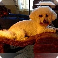 Adopt A Pet :: Adopted!!Oliver - N. CA - Tulsa, OK