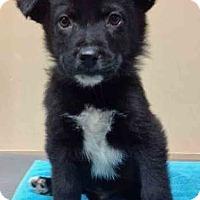 Adopt A Pet :: ADOPTED!!!   Brando - Oswego, IL