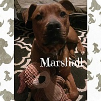 Adopt A Pet :: Marshall #2 - Des Moines, IA