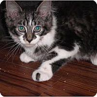 Adopt A Pet :: Gizzmo - Warren, MI