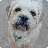 Adopt A Pet :: Gulliver - dewey, AZ