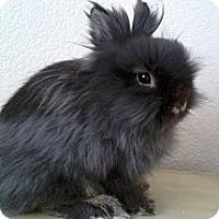 Adopt A Pet :: Sherman - Watauga, TX