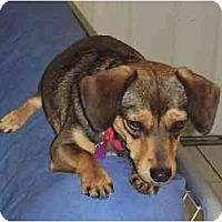 Adopt A Pet :: Bessie (ADOPTED) - Miami, FL
