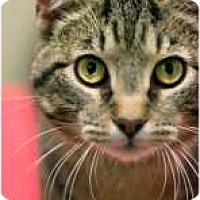 Adopt A Pet :: Claude - Chicago, IL