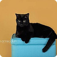 Adopt A Pet :: Cole - Birmingham, AL