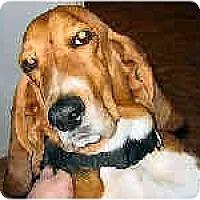 Adopt A Pet :: Phyllis - Phoenix, AZ