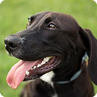 Adopt A Pet :: Roger - Natchitoches, LA