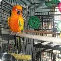 Adopt A Pet :: Tang - Neenah, WI