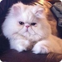 Adopt A Pet :: Casper - Beverly Hills, CA
