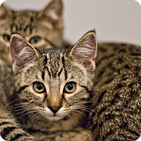 Adopt A Pet :: Miranda - Lincoln, NE