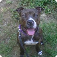 Adopt A Pet :: Pippa - Kimberton, PA