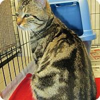 Adopt A Pet :: Garrett - Norwich, NY