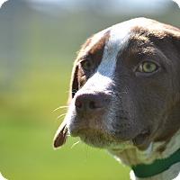 Adopt A Pet :: Duff - Lake Odessa, MI
