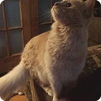 Adopt A Pet :: Beau Roi - Ennis, TX
