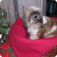 Adopt A Pet :: Charlene - Yucaipa, CA