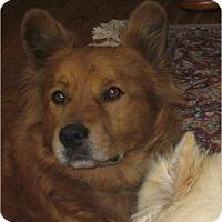 Adopt A Pet :: Gordo - Lomita, CA