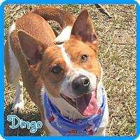 Adopt A Pet :: Dingo - Jasper, IN
