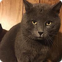 Adopt A Pet :: Bubba - Springfield, VA